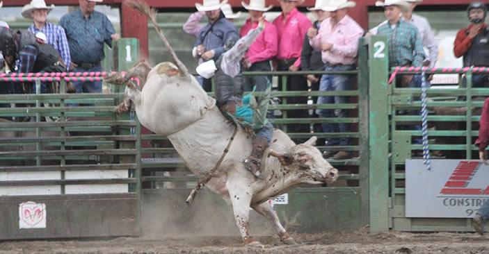 2018 TETWP bull rider